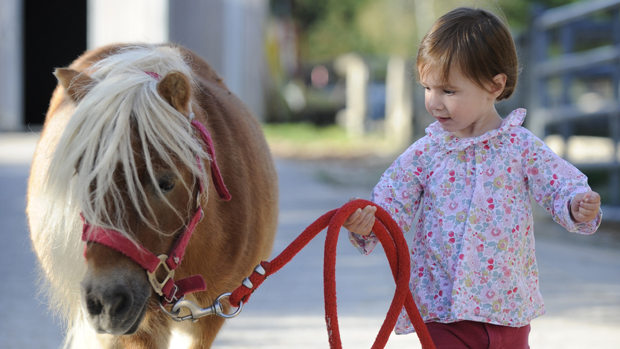 équitation bébé cavalier