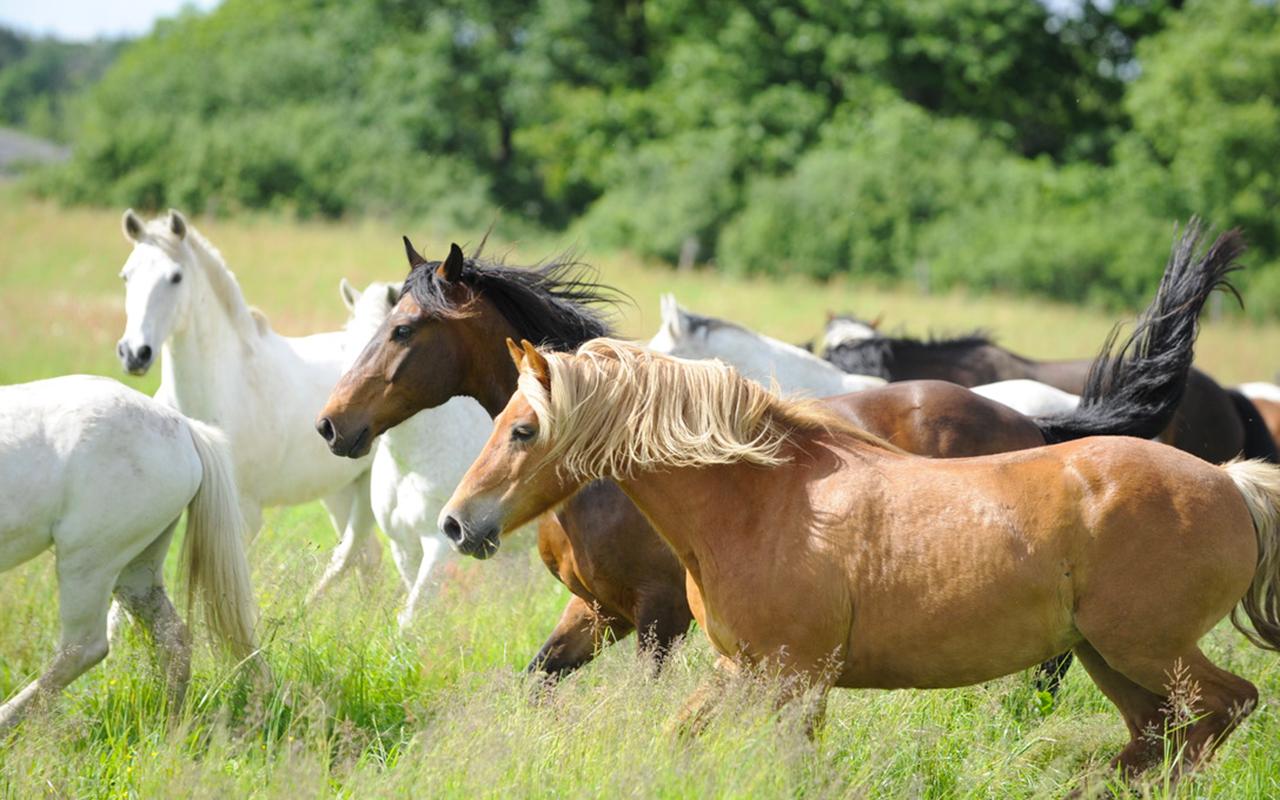 weekend équitation