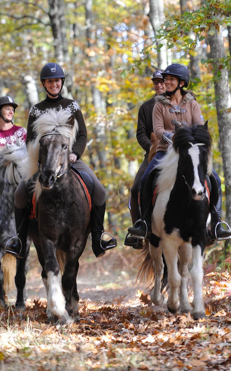 équitation islandaise Club Hippique Forêt de Moulière