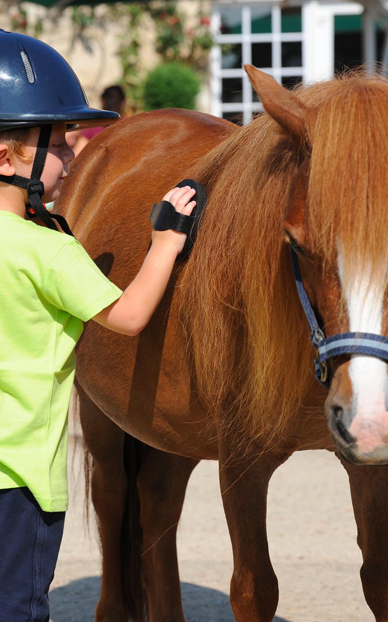 Les demi jounées stage équitation